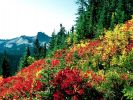 Subalpine Meadows at Paradise, Mt. Rainier, Washington.jpg