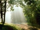Sunbeams, Percy Warner Park, Tennessee.jpg